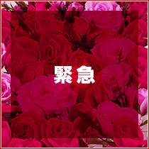 善通寺市・Ti amo〜愛してます〜丸亀・善通寺店の求人用画像_03