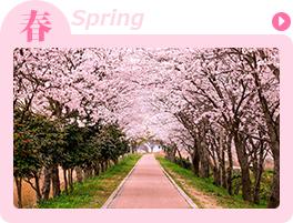 春-spring-の高収入バイト